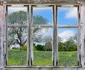 Texas bluebonnets vista through an old window frame Royalty Free Stock Photo