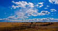 Texas Farm Lands in the Panhandle of Texas Royalty Free Stock Photo