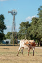 Texas Longhorn and the Windmill Royalty Free Stock Photo