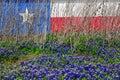 Texas-Markierungsfahnen-wilde Blume Lizenzfreie Stockbilder