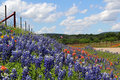 Texas wildflowers including bluebonnets and indian paintbrushes cover a field in front of a flying flag Stock Photos