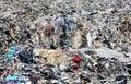 Textile waste in Bangladesh Royalty Free Stock Photo