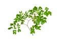 Textur av den gröna leafen Royaltyfria Foton