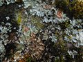 Textur vegetal tree Royalty Free Stock Photo