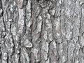 Textura de corteza de un arbol / Bark texture of a tree Royalty Free Stock Photo
