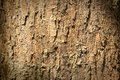 Textura de la corteza Fotografía de archivo libre de regalías