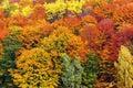 Textural image of autumn foliage Royalty Free Stock Photo
