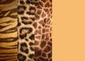 Texture Of Animal Skins