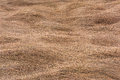 Texture background of dry grass Royalty Free Stock Photo