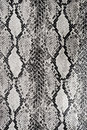 Texture Background Snake Leather