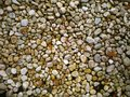 Texture, background of stones. Royalty Free Stock Photo