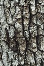 Bark of tree