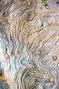 Texture of bark wood background close up detail Stock Photos