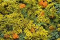 Texture of beautiful yellow and orange flowers Stock Photography