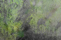 Texture of black grunge glassand green moss Royalty Free Stock Photo