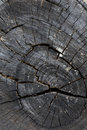 Texture of black wood logs background with crack damage Royalty Free Stock Photo