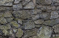 Texture castle wall gray stone blocks old covered with green moss texture Royalty Free Stock Photo