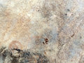 Texture cured animal skin Royalty Free Stock Photography