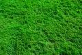 Texture d'herbe Photographie stock libre de droits