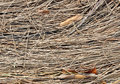 Texture of dried pine needles and birch leaves Royalty Free Stock Photo
