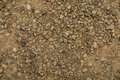 Texture of dry gravel Royalty Free Stock Photo