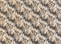 Texture of fabric stripes zebra Royalty Free Stock Photo