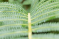 Texture of fern Royalty Free Stock Photo