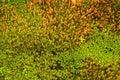 Texture Of Fresh Green Moss