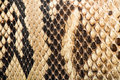 Texture of genuine snakeskin close up real leather Stock Photography