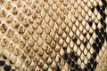 Texture of genuine snakeskin close up real leather Stock Images