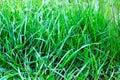 texture of grass