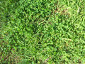 Texture with grass for website Royalty Free Stock Image