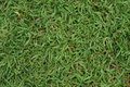 Texture of grass which represent as something relax and healthy Stock Image
