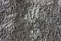 Texture of gray cement wall grained Stock Images