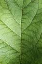 Leaves leaf texture green organic background macro layout closeup toned