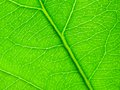 Texture green leaf as background Royalty Free Stock Photos