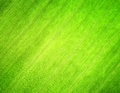 Texture of green leaf. Nature background Stock Photography