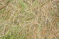 Texture of hay fresh green Stock Images