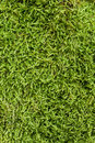 Texture of moss Royalty Free Stock Photography