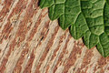 Texture of nettle leaf on wood Stock Image