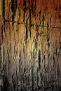 Texture of the old damaged pine wood Royalty Free Stock Image