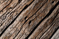 The texture is an old gray, rotted wooden board with deep wavy cracks and holes. Royalty Free Stock Photo