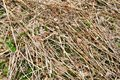 Texture of old rotten old sticks, branches, straws with knots and dry leaves with cracks and knots covered with moss Royalty Free Stock Photo