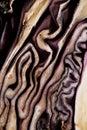 Texture Old-styled de chou rouge moitié-putréfié Images libres de droits