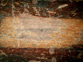 Texture of old varnish wood. Stock Image