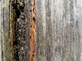 Texture of old weathered wood