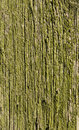 Texture, old wood covered with green moss Royalty Free Stock Photo