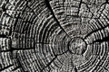 Texture of an old wooden log Royalty Free Stock Photography