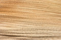 Texture of palm limb closeup dry use for background Royalty Free Stock Image