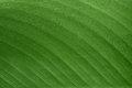 The texture and pattern of green leaf for the background Royalty Free Stock Photo